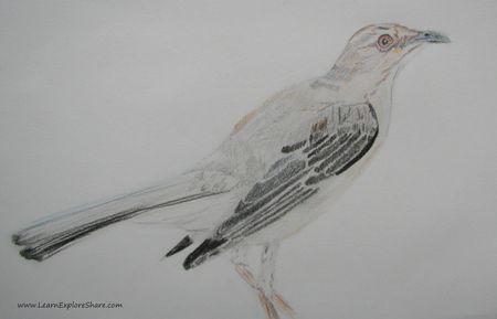 Week15_mockingbird