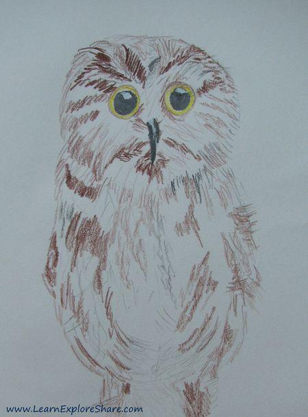 Week17_owlet