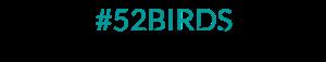 52birds